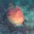 Асцидия и красные водоросли